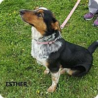 Adopt A Pet :: Esther - Knoxville, IA