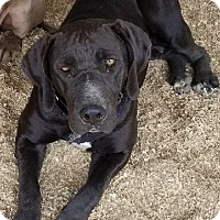 Adopt A Pet :: Meadow - Corona, CA