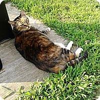 Adopt A Pet :: Tigger - Armuchee, GA