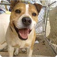 Adopt A Pet :: Ernie - Acton, CA