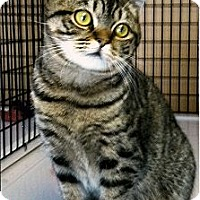 Adopt A Pet :: Krissy - Medway, MA