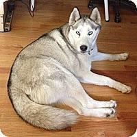 Adopt A Pet :: Balto - Santa Monica, CA