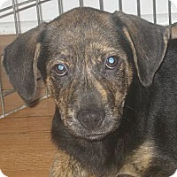 Adopt A Pet :: Walter (ADOPTED!) - Chicago, IL