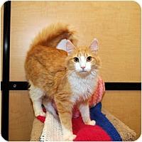 Adopt A Pet :: Aubrey - Farmingdale, NY
