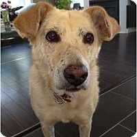 Adopt A Pet :: Ginger - Adoption Pending - Vancouver, BC