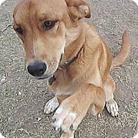 Adopt A Pet :: Sugar  *Adopted - Tulsa, OK