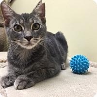 Adopt A Pet :: Christian - Deerfield Beach, FL