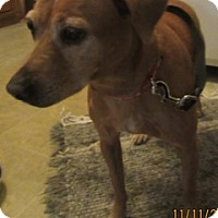 Adopt A Pet :: Tracy - Von Ormy, TX