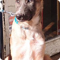 Adopt A Pet :: Fred PENDING! - Spring City, TN