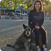 Adopt A Pet :: Love Bug 'Bug' - Windsor, CA