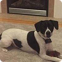 Adopt A Pet :: Jack - Newport, KY