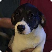 Adopt A Pet :: Naomi - Garden City, MI