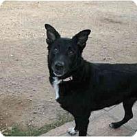 Adopt A Pet :: CUPCAKE - Phoenix, AZ
