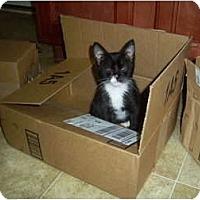 Adopt A Pet :: Chang - Mobile, AL