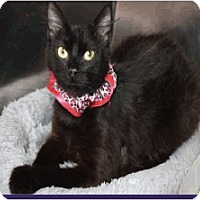Adopt A Pet :: Janna - Colorado Springs, CO
