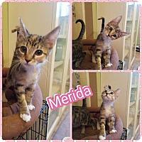 Adopt A Pet :: Merida - Scottsdale, AZ
