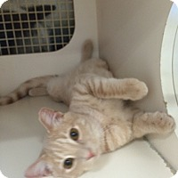 Adopt A Pet :: Mason - Stafford, VA