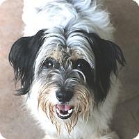 Adopt A Pet :: Keegan - Norwalk, CT