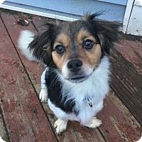 Adopt A Pet :: Reba - Newtown, CT