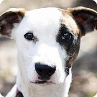 Adopt A Pet :: Raleigh - Brattleboro, VT