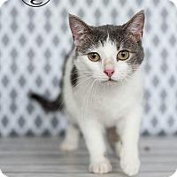 Adopt A Pet :: Tilt - Columbus, OH