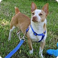 Adopt A Pet :: Melvin - Winters, CA