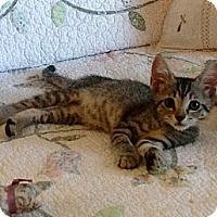 Adopt A Pet :: Sissy and Sassy - Vero Beach, FL