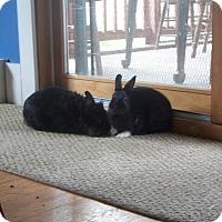 Adopt A Pet :: Sally - Portland, ME