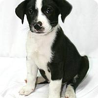 Adopt A Pet :: Petey - Lufkin, TX