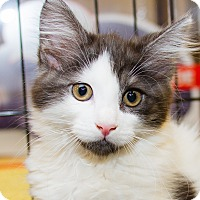 Adopt A Pet :: Kissy - Irvine, CA