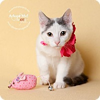 Adopt A Pet :: China Doll - Houston, TX