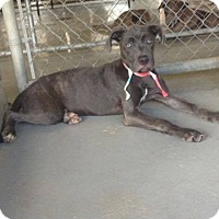 Adopt A Pet :: Genie - Livingston Parish, LA