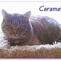 Adopt A Pet :: Caramel - Culpeper, VA