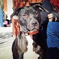 Adopt A Pet :: Maxilynn - Alpharetta, GA
