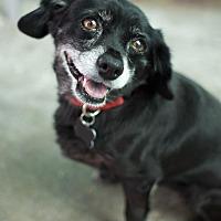 Adopt A Pet :: Pichec - Canyon Country, CA
