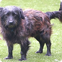 Adopt A Pet :: Harvey - Norwalk, CT
