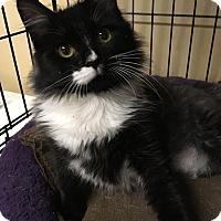 Adopt A Pet :: Boo - Monroe, GA