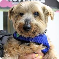 Adopt A Pet :: Salvador - San Francisco, CA
