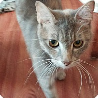 Adopt A Pet :: Iris - New Smyrna Beach, FL