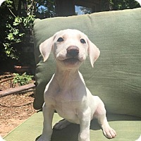 Adopt A Pet :: The 100 Litter- Murphy - Charlotte, NC