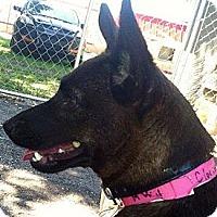 Adopt A Pet :: Clarissa - Brooksville, FL
