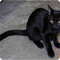 Adopt A Pet :: Ebony - Greenville, SC