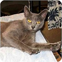 Adopt A Pet :: Gris - Portland, OR