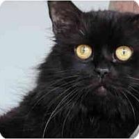 Adopt A Pet :: Dakota - Columbus, OH