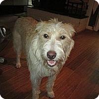 Adopt A Pet :: Jolene - Apex, NC