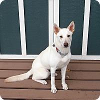 Adopt A Pet :: Sierra - Ormond Beach, FL