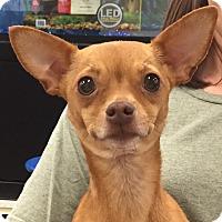 Adopt A Pet :: Lynn - geneva, FL