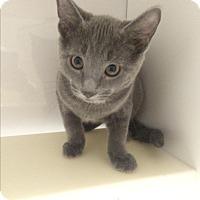 Adopt A Pet :: Stimpy - Richboro, PA