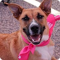Adopt A Pet :: Kassidy - McDonough, GA