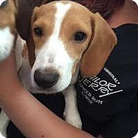 Adopt A Pet :: TRIXIE - Marlton, NJ